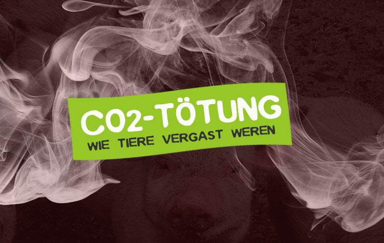 CO2 Tötung - Wie Schweine und Küken vergast werden