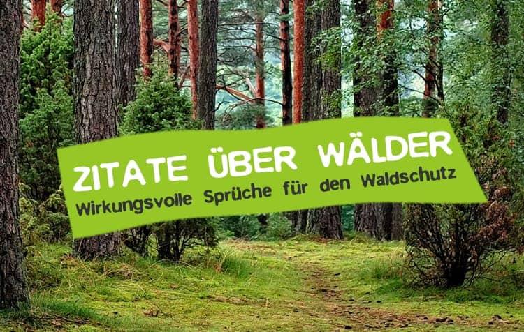 Wald Zitate - Sprüche über Waldschutz und Waldsterben