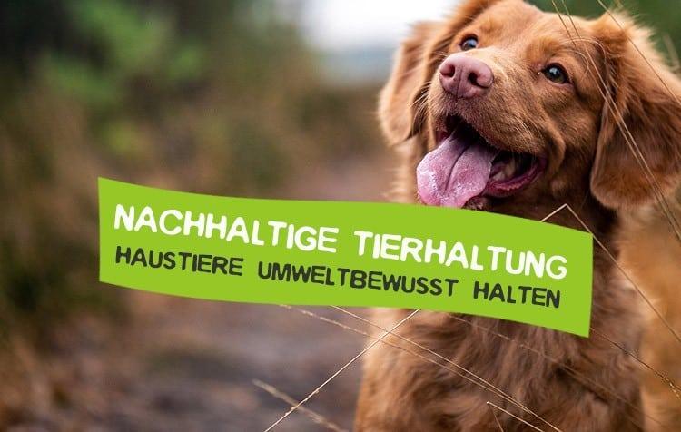 Tiere nachhaltig halten Tipps