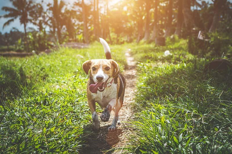Glücklicher Hund auf Waldweg