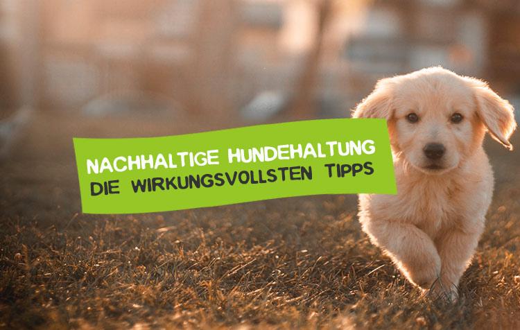 Hunde nachhaltig halten - So geht's
