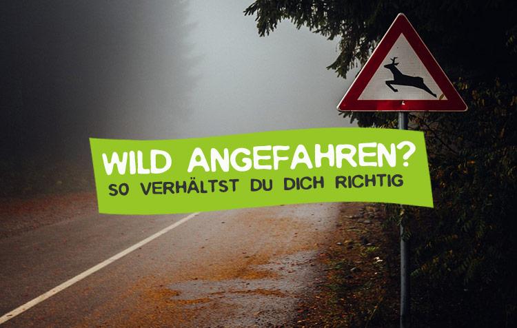 Wild angefahren - Was tun bei Wildunfall?