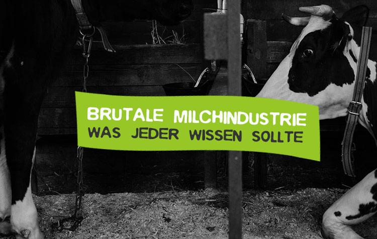 Brutale Milchindustrie - Was jeder wissen sollte