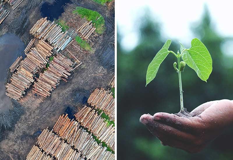 Umweltethik - Warum so wichtig?