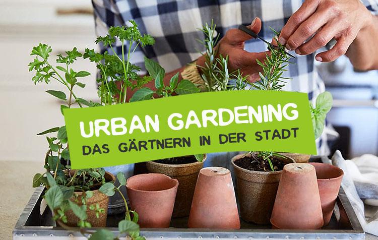 Urban Gardening - Das Gärtnern in der Stadt