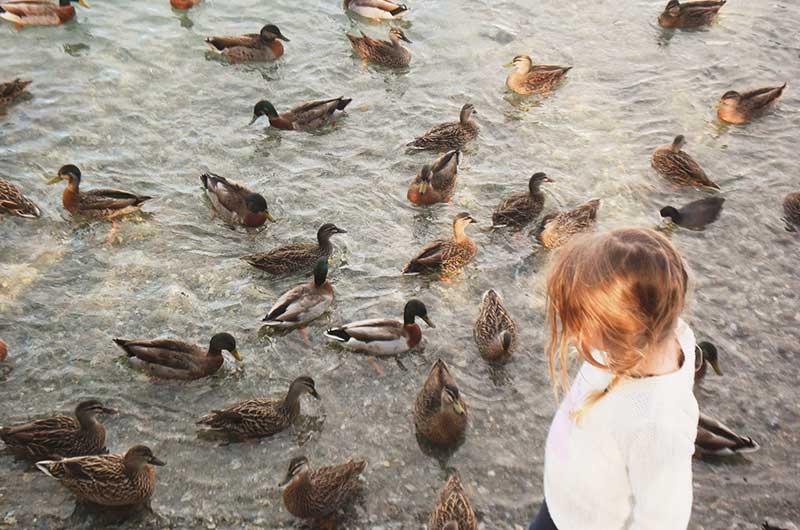 Mädchen mit Enten - Liebe zu Tieren