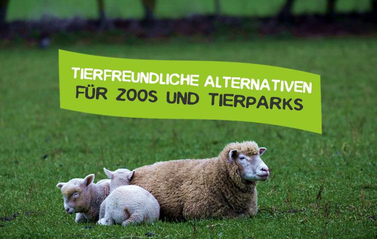 Tierfreundliche Zoo Alternative