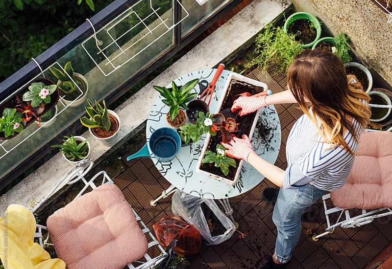 Urban Gardening - Gärtnern auf dem Balkon