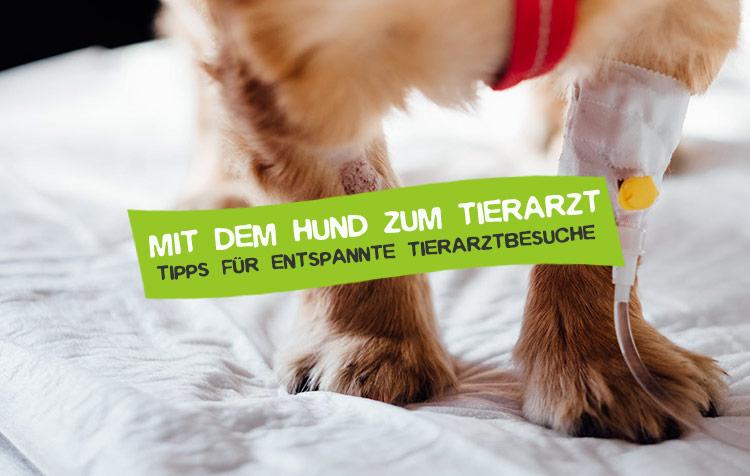 Mit dem Hund zum Tierarzt Tipps