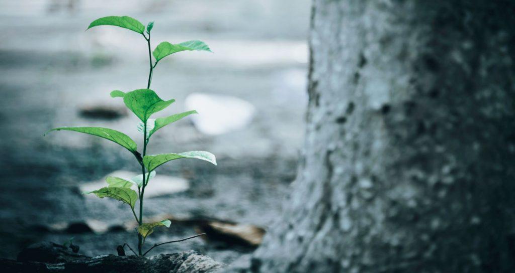 Wachstum bei CareElite