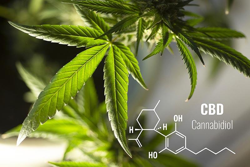 Unterschied von CBD zu anderen Cannabinoiden wie THC