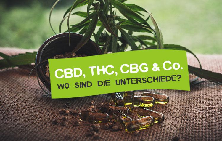 Unterschiede von CBD und THC - Cannabinoide