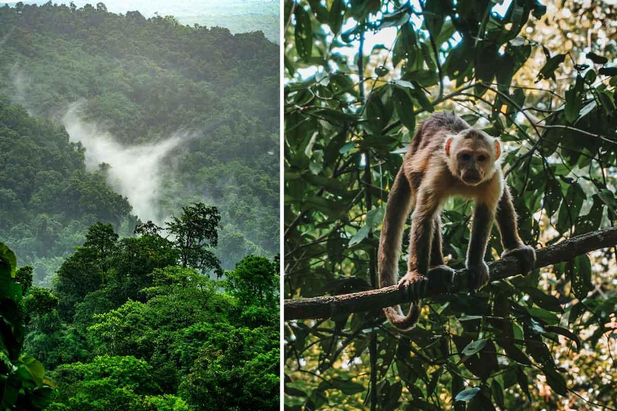 Nachhaltige Gutscheine für den Schutz der Regenwälder