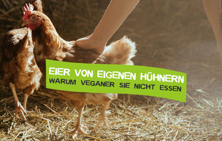 Eier von eigenen Hühnung und eigener Haltung nicht vegan