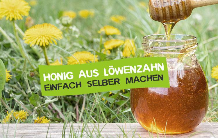 Honig aus Löwenzahn selber machen