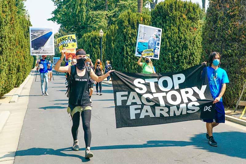 Stop factory Farms Veganer Aktivismus für Tierrechte
