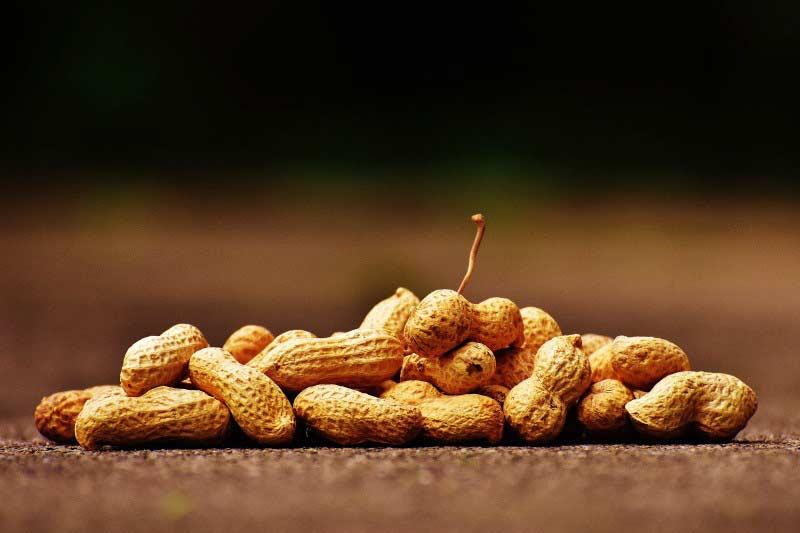Erdnüsse enthalten viel Vitamin B3