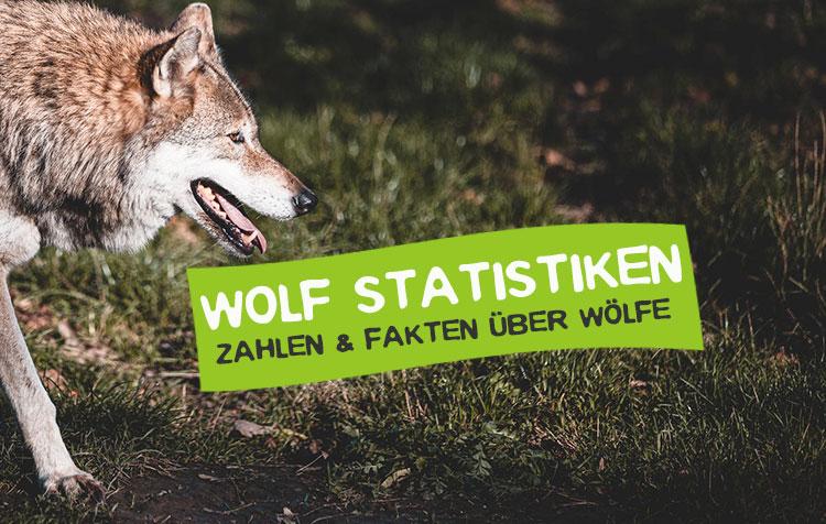 Statistiken über Wölfe