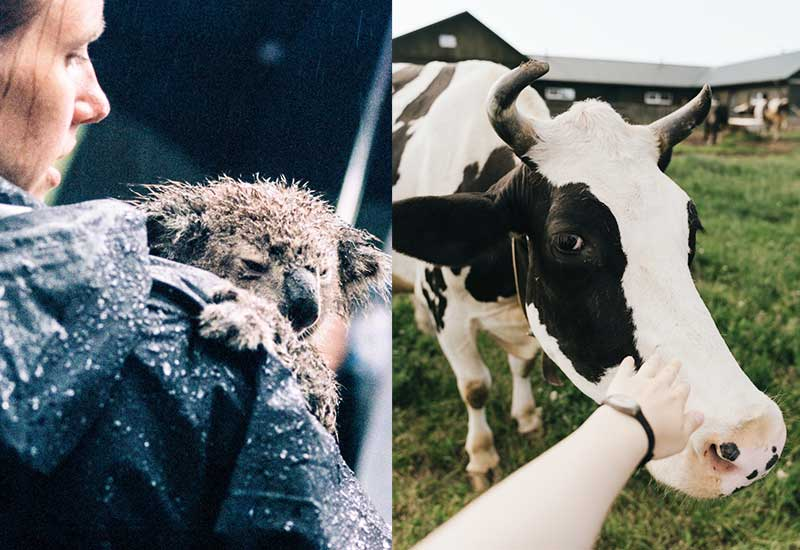 Vegan gegen Gewalt - Menschen helfen Tieren