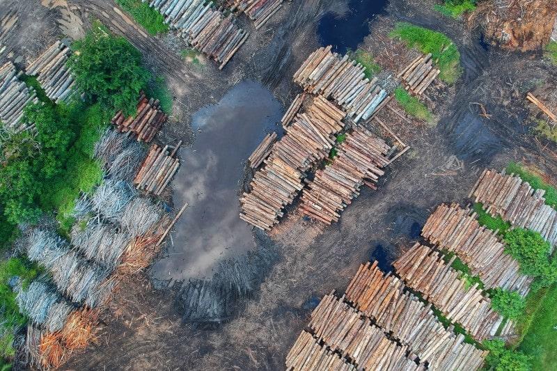 Abholzung Umweltverschmutzung Ernährung Klima