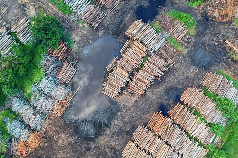 Massentierhaltung und die Folgen für die Umwelt