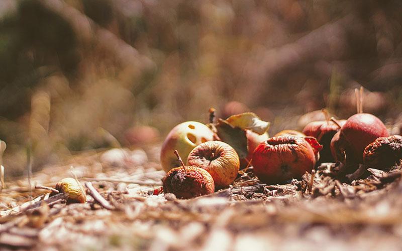 Matschige Äpfel auf dem Boden