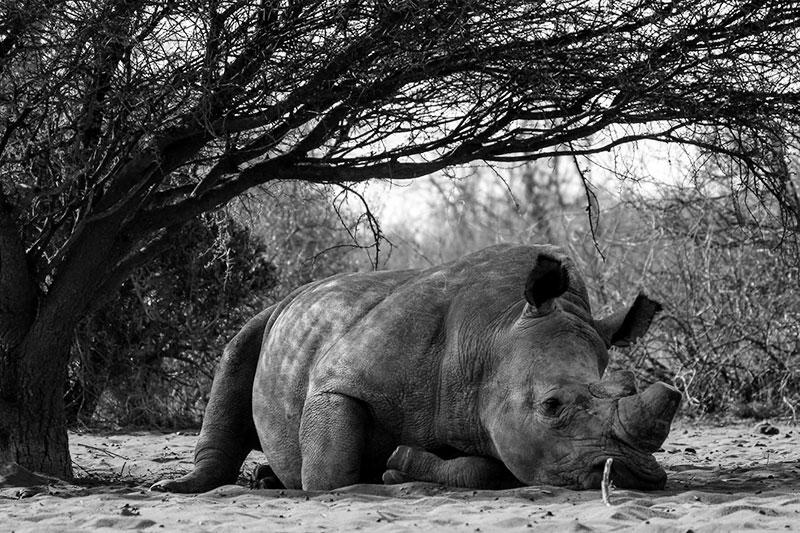 Sprüche über das Artensterben und für den Artenschutz