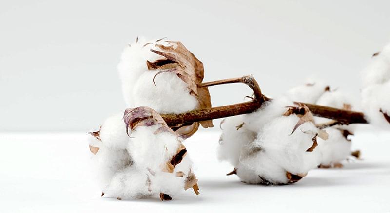 Was ist Bio Baumwolle?