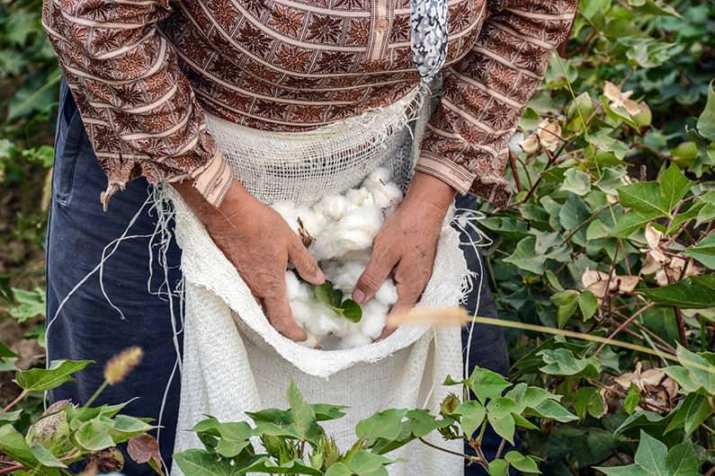 Wie wird Bio-Baumwolle hergestellt?