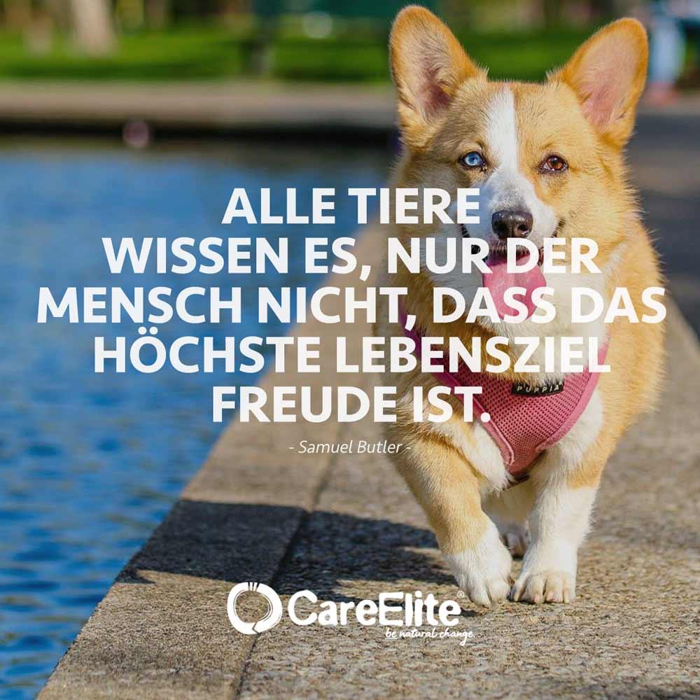 Tiere wissen Lebensziel Freude Zitat