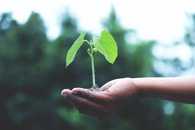 Dreieck der Nachhaltigkeit erklärt