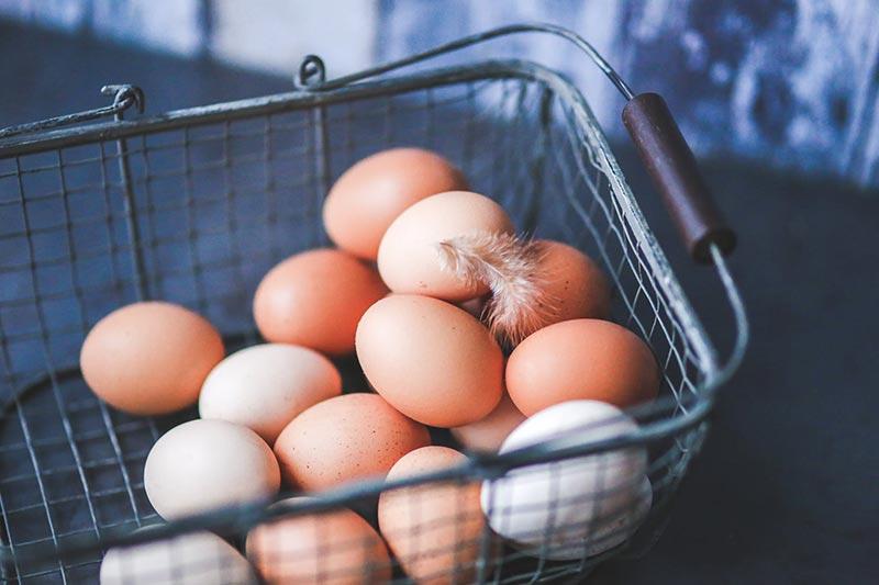Hühnerei Alternativen aus Pflanzen