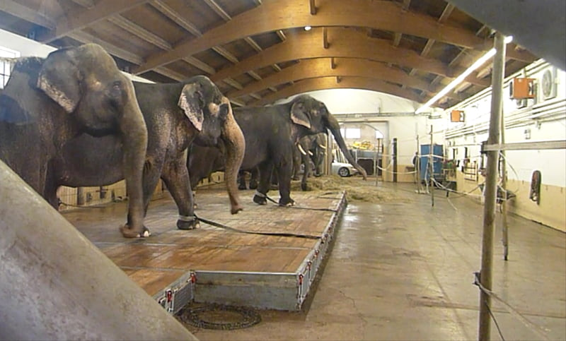 Tierquälerei an Tieren im Zirkus