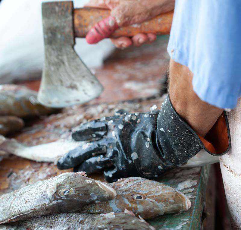 Veganer essen keinen Fisch - warum?