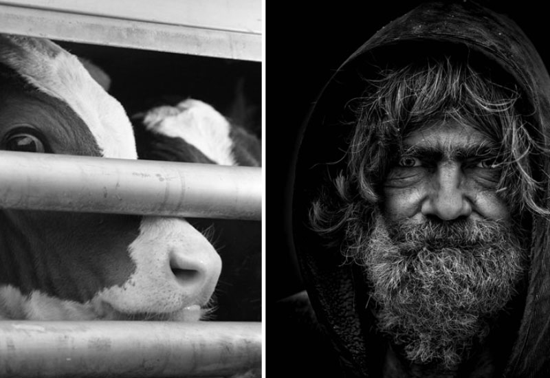 Persönliche Entscheidung für Fleisch fordert Opfer