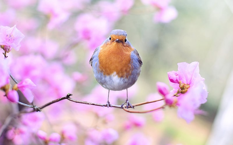 Vogelgezwitscher im Garten für Vögel