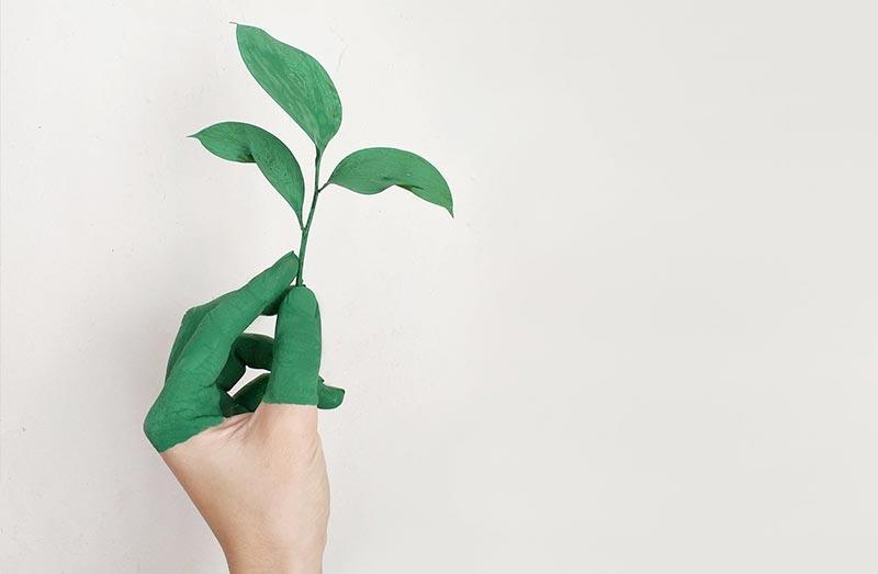 Grünes Marketing - Definition, Vorteile und mehr