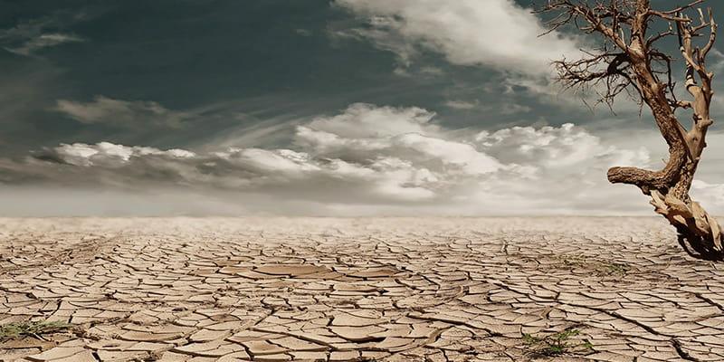 Globale Erwärmung als Grund für pflanzliche Ernährung