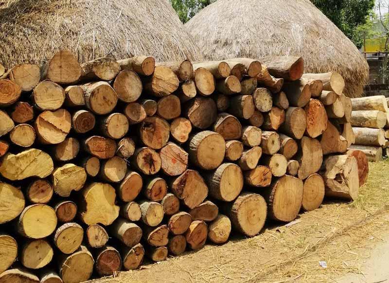 Holzstapel vor Strohhäusern