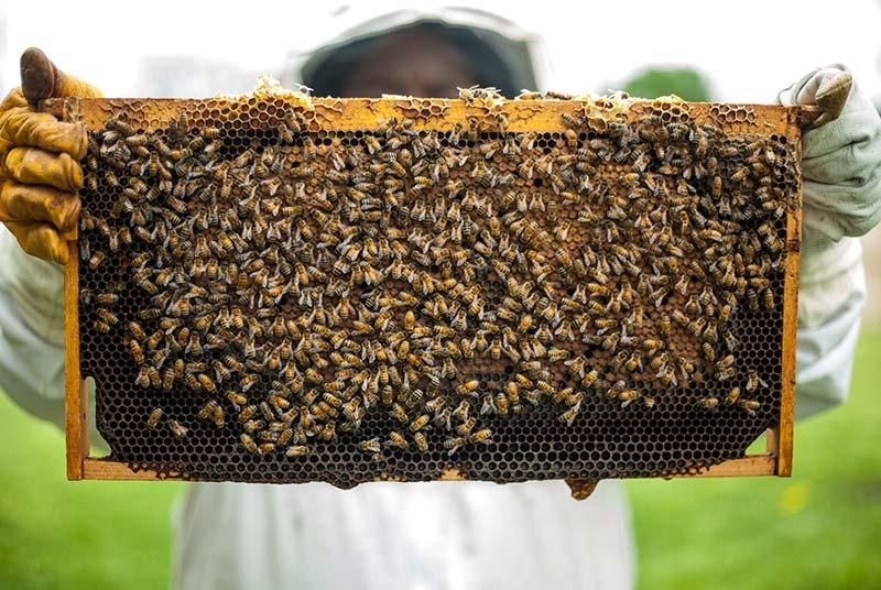 Bienen Stock - Warum ist Honig nicht vegan?