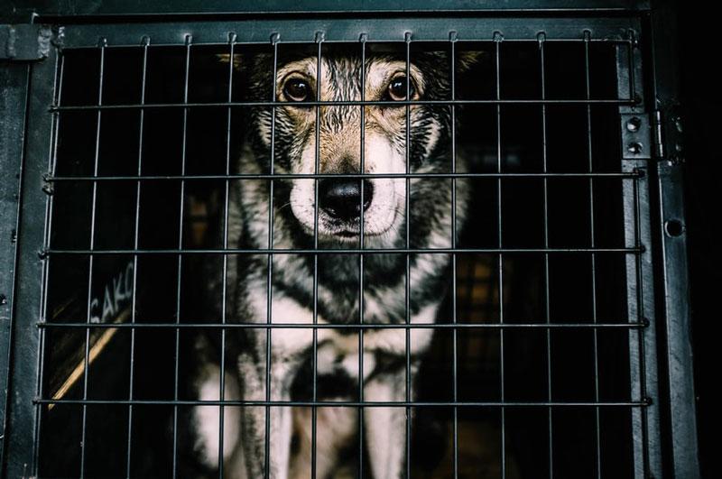 Karmapunkte sammeln und Tiere retten