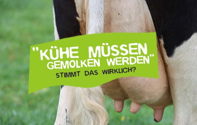 Müssen Kühe gemolken werden?