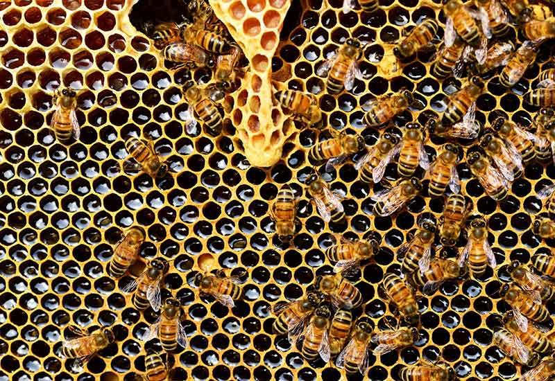 Honig ist auch intensive Tierhaltung - Was tun?