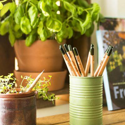 Nachhaltige Bleistifte zum Einpflanzen