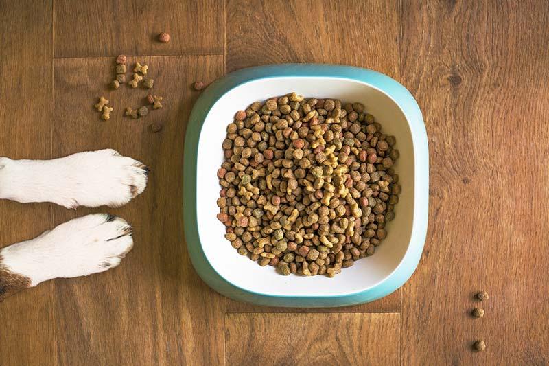 Tierfutter - Nachhaltige Haltung von Haustieren