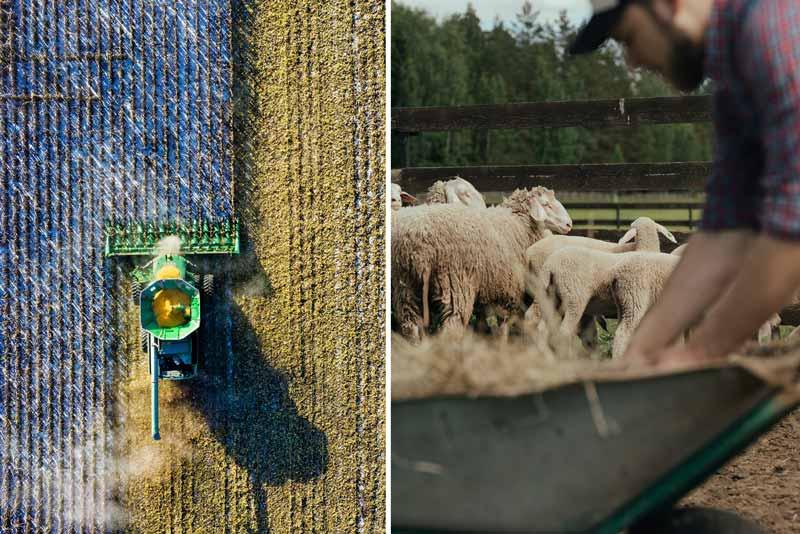 Ökolandbau Feldarbeit und Tierhaltung