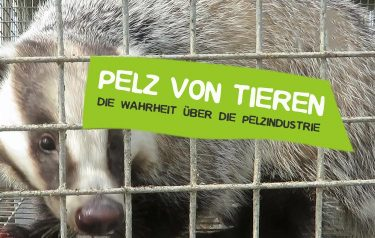Pelzindustrie - Wie Tiere für Pelz leiden müssen