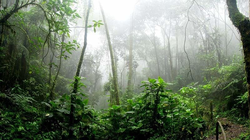 Kippelemente Klimawandel Regenwald
