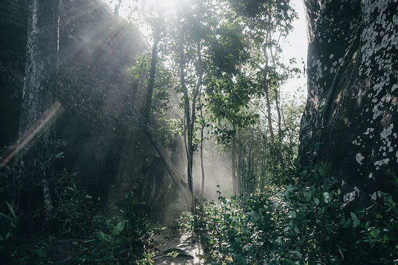 Regenwald schützen - Was kann jeder tun?