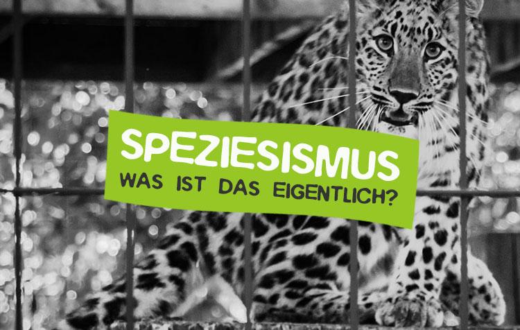 Speziesismus - Was ist das?